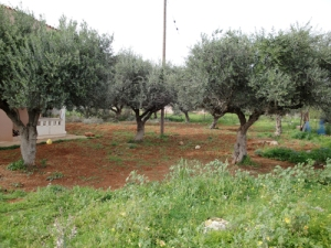 A Garden in Crete