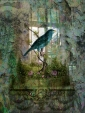 Indoor Garden with Bird © Sarah Vernon