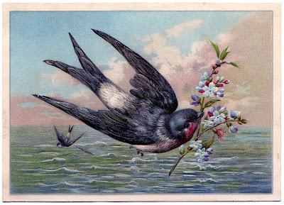 SwallowOcean-GraphicsFairy