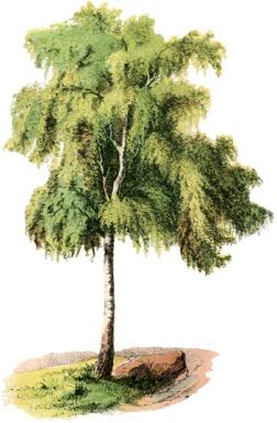 Antique Tree Image - The Graphics Fairy