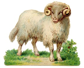 Sheep Image Vintage - The Graphics Fairy