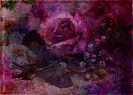Valley Rose © First Night Design