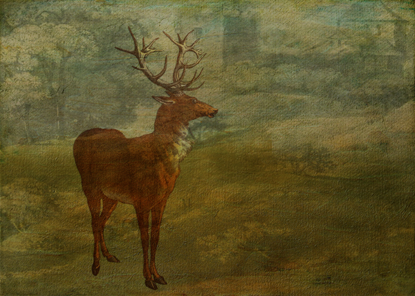 Red Stag Looking for Landseer