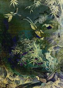 Birds of the Jungle © First Night Design