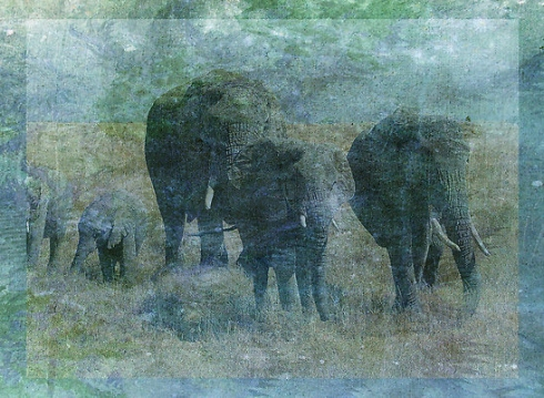 Chalk Elephants © First Night Design
