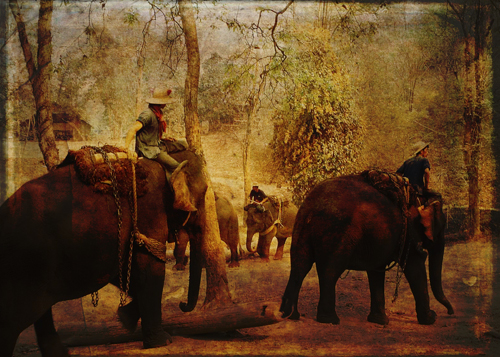 Elephants Learning © First Night Design