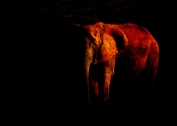 Save the Elephant © First Night Design