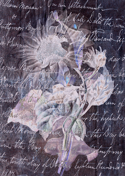 Lilyflower Abstract © First Night Design