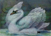 The Swan Also Rises © First Night Design