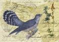 Blue Bird of Happiness © First Night Design