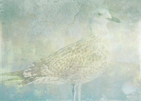 Seagull Sonata © First Night Design