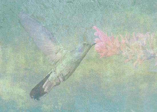 Hummingbird Tune @ First Night Design
