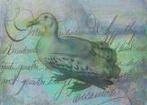 The Albatross Did Follow © First Night Design