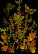 Japanned Butterflies © Sarah Vernon