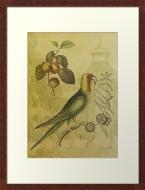 Parrot with Plums © Sarah Vernon