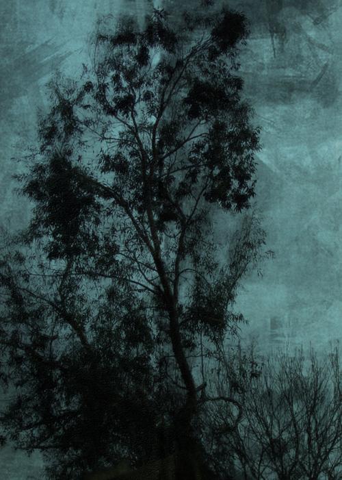 The Tree © Sarah Vernon