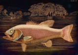 Pink Salmon © Sarah Vernon