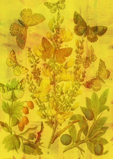 Butterfly Cascade © Sarah Vernon [Crated]