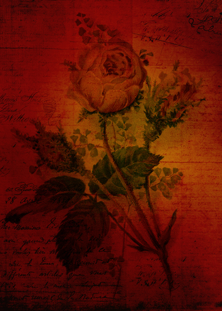 Red Rose © Sarah Vernon [Crated]