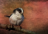 Bird on the Beam © Sarah Vernon [Crated]