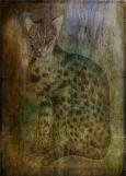 The Lynx Has Landed © Sarah Vernon