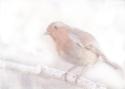 Stay, little cheerful Robin! © Sarah Vernon