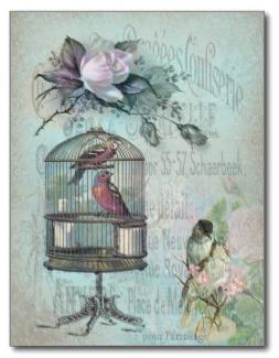 Birdcage Blossom Postcards © Sarah Vernon