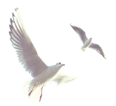 birdsaloneunsplashblog
