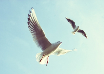 fullbirdsunsplashblog