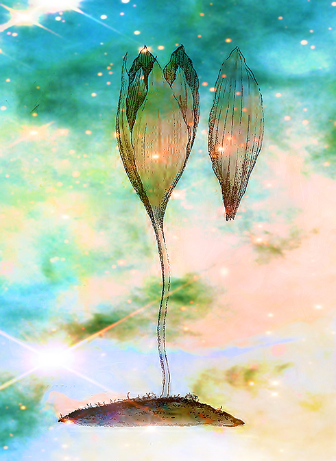 Birth of a Triffid © Sarah Vernon