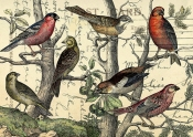 Finches Looking © Sarah Vernon
