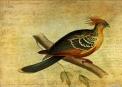 Whirring Pheasant Springs © Sarah Vernon