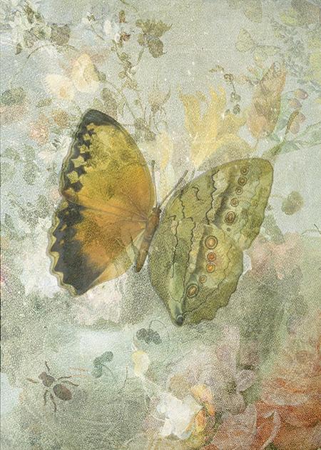 "Butterflies from China, Japan, and Corea: ""Biodiversity Library"":http://biodiversitylibrary.org/page/45490916 Texture: ""Kerstin Frank"":https://www.flickr.com/photos/kerstinfrank-design/9181048645/in/photostream/ Flowers: ""Rijksmuseum"":https://www.rijksmuseum.nl/en/my/collections/150967--sarah-vernon/mijn-eerste-verzameling/objecten#/SK-A-3899,0 Original & vintage art © First Night Design [www.firstnightdesign.wordpress.com]"