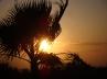 Silhouette Sunset © Sarah Vernon