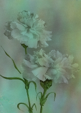 'Such Serviceable Flowers' © Sarah Vernon