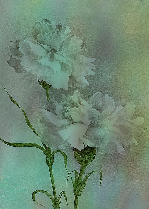 'Such Serviceable Flowers' © Sarah Vernon
