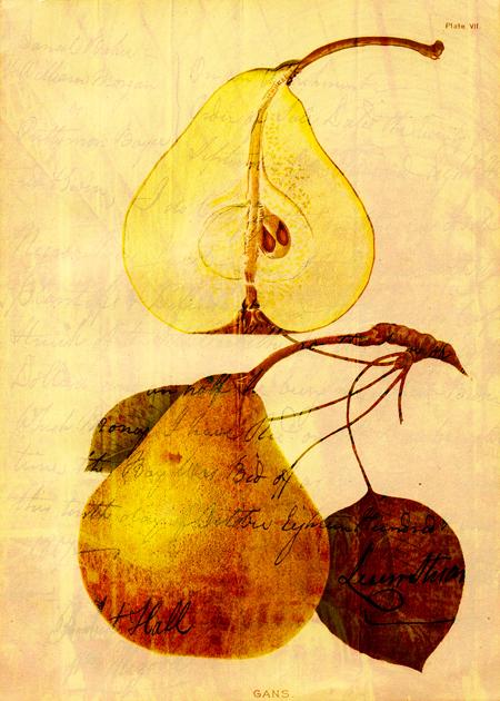 Copper Pear © Sarah Vernon [Zazzle]