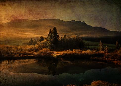 Scent of Pines © Sarah Vernon