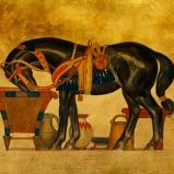 Black Stallion © Sarah Vernon