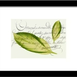 Buy framed print of Green Leaf © Sarah Vernon at Fine Art America