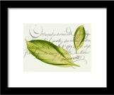 Buy framed print of Green Leaf © Sarah Vernon at Fine Art America