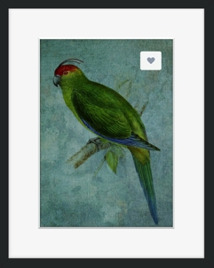 Parrot Fashion © Sarah Vernon - Buy from Crated