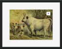 Buy The Cows Came Home Framed Print © Sarah Vernon at Crated