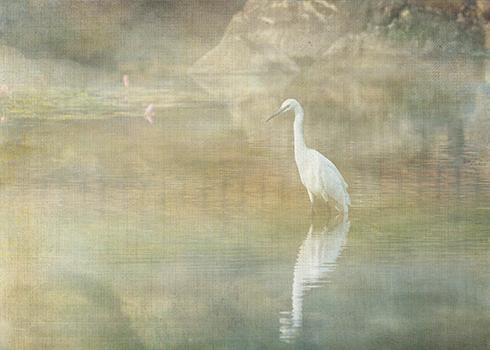 Reflecting Egret © Sarah Vernon