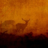 Shadow Deer © Sarah Vernon Greeting Cards