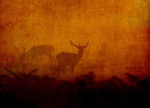 Shadow Deer © Sarah Vernon Greeting Cards