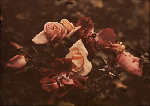 Roses of Yesteryear © Sarah Vernon at Redbubble