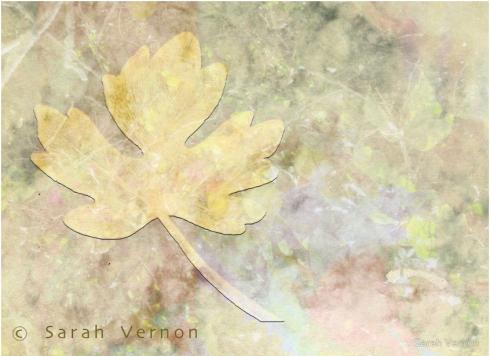 Autumn Fall © Sarah Vernon prints & home decor at Redbubble