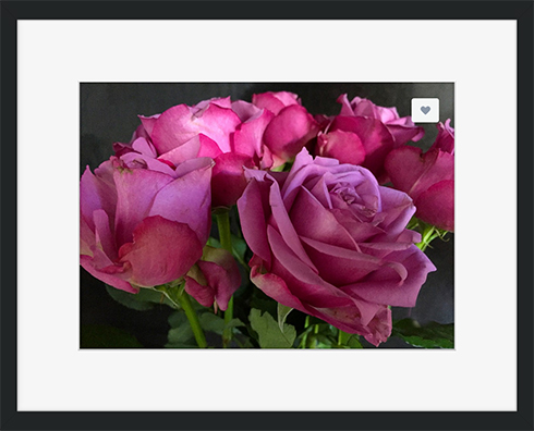 Pink Chiffon Framed Print at Crated © Sarah Vernon