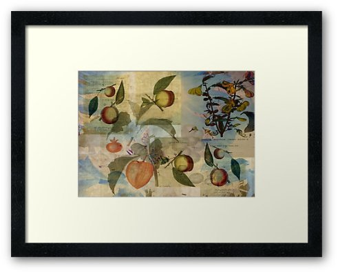 Chinese Lantern Surrounded © Sarah Vernon Framed Print at Redbubble